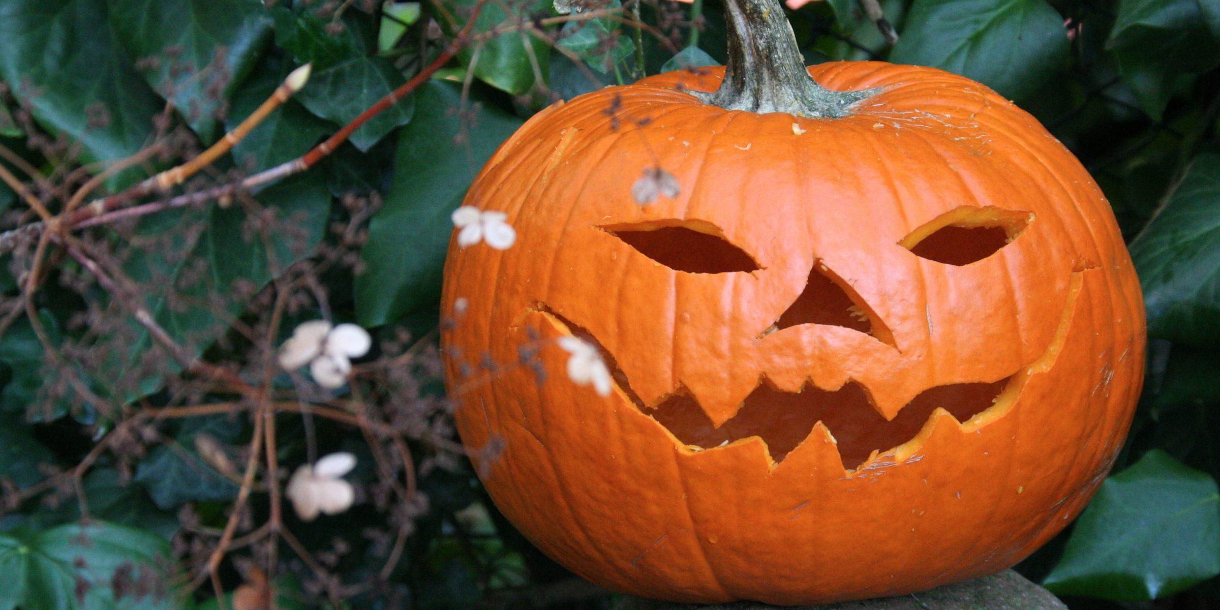 A carved Halloween pumpkin